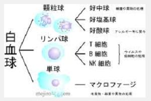 白血球.png